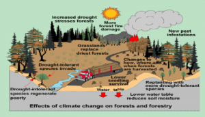 gambar climate 4 300x171 HOW FOREST INFLUENCE CLIMATE CHANGE MITIGATION