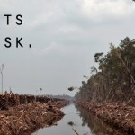 forests are at risk Perlindungan Hutan